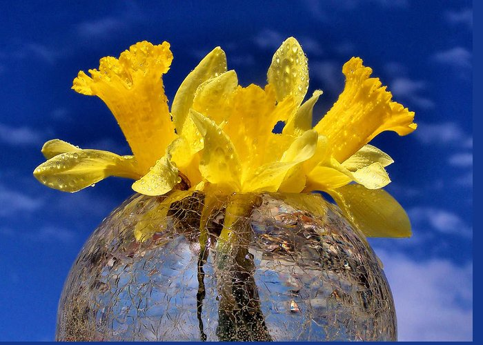 Glass Greeting Card featuring the photograph Brighten Your Day by Karen Scovill
