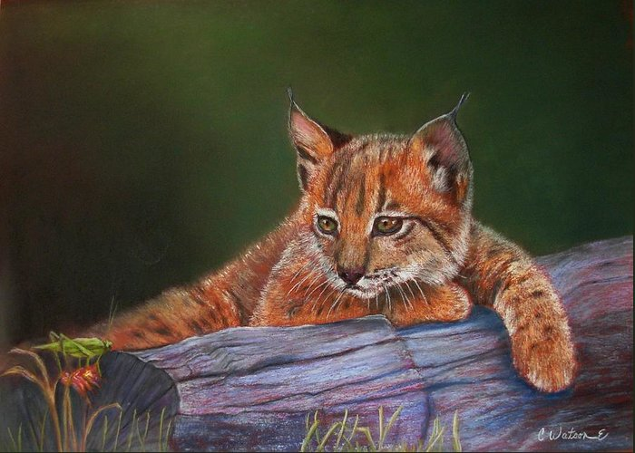 Iberian Lynx Greeting Card featuring the painting Brisa by Ceci Watson
