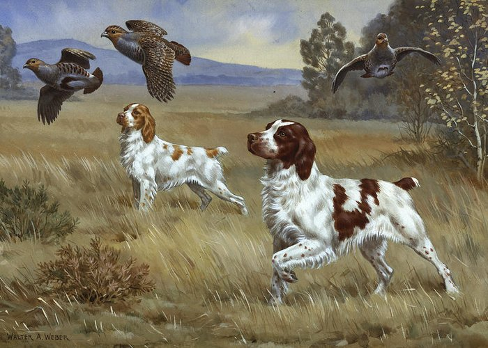 Illustration Greeting Card featuring the photograph Brittany Spaniels Flush Three Birds by Walter A. Weber