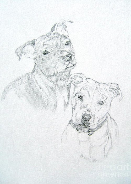 Mans Best Friend Pencil Drawing Greeting Card featuring the drawing Brittney by Nancy Rucker