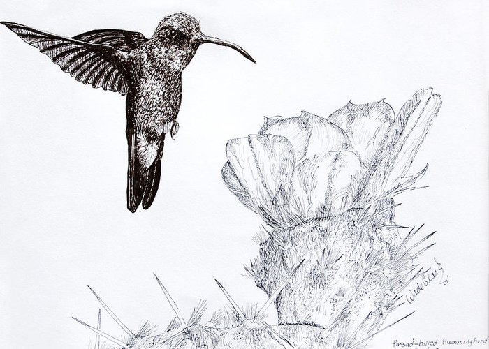 Wildlife Greeting Card featuring the drawing Broadbilled Hummingbird by Wade Clark