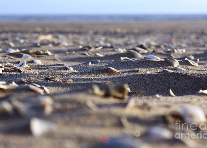 Sand Greeting Card featuring the photograph Broken Shells by Balanced Art