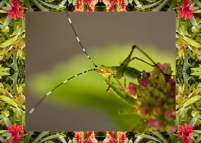 Nature Photos Greeting Card featuring the photograph Bromeliad Grasshopper by Bell And Todd