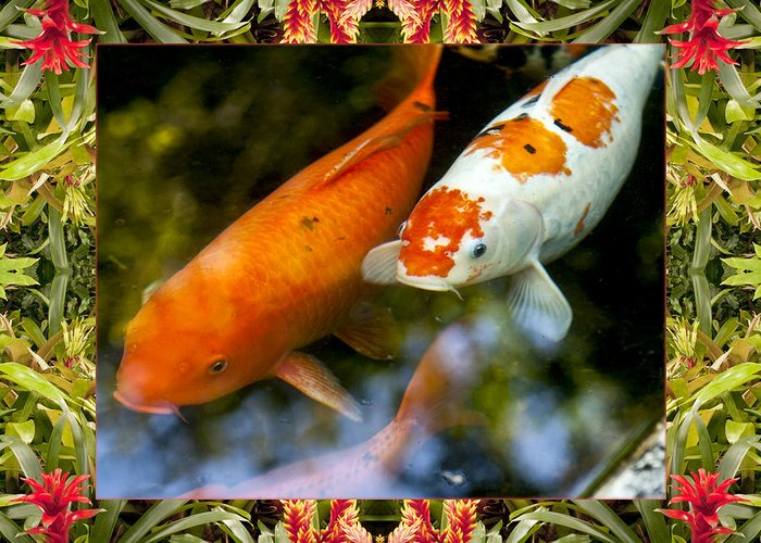 Nature Photos Greeting Card featuring the photograph Bromeliad Koi by Bell And Todd
