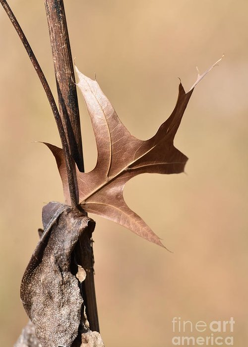 Pin Oak Greeting Card featuring the photograph Bronzed Oak Leaf Vertical by Rowena Throckmorton
