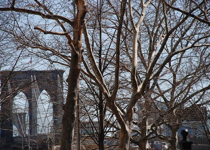 Architecture Greeting Card featuring the photograph Brooklyn Bridge Thru The Trees by Rob Hans