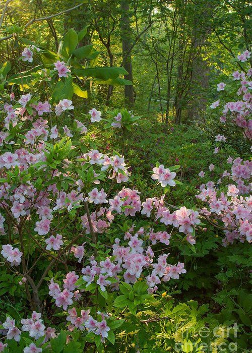 Spring Landscapes Greeting Card featuring the photograph Brookside Gardens 5 by Chris Scroggins