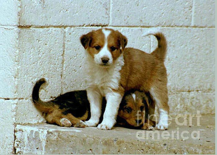 Puppies Greeting Card featuring the photograph Brothers by Kathy McClure