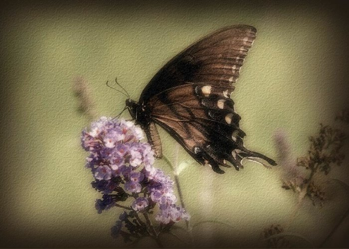 Butterfly Greeting Card featuring the photograph Brown And Beautiful by Sandy Keeton