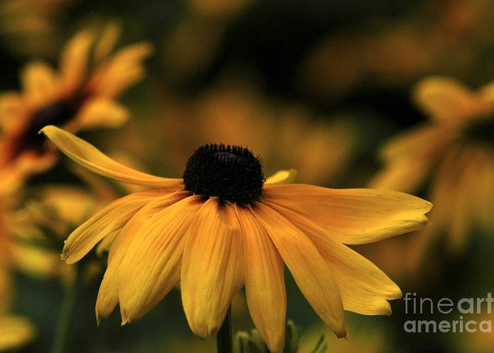 Flower Greeting Card featuring the photograph Brown Eyed Susan by Dot Lestar