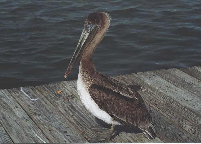 Bird Greeting Card featuring the photograph Brown Pelican On Pier 2 by Wendell Baggett