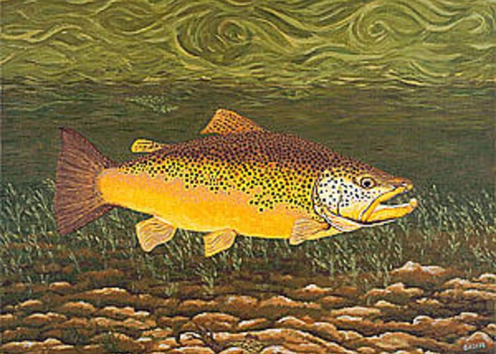 Art Print Prints Canvas Framed Giclee Fine Brown Trout Fish Angler Angling Fishing Fishermen Decor Greeting Card featuring the painting Brown Trout Fish Art Print Touch Down Brown Trophy size Football shape Brown Trout Angler Angling by Patti Baslee