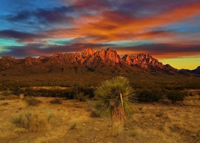 Organ Mountains Greeting Card featuring the photograph Brushed Red by Felix Valenzuela