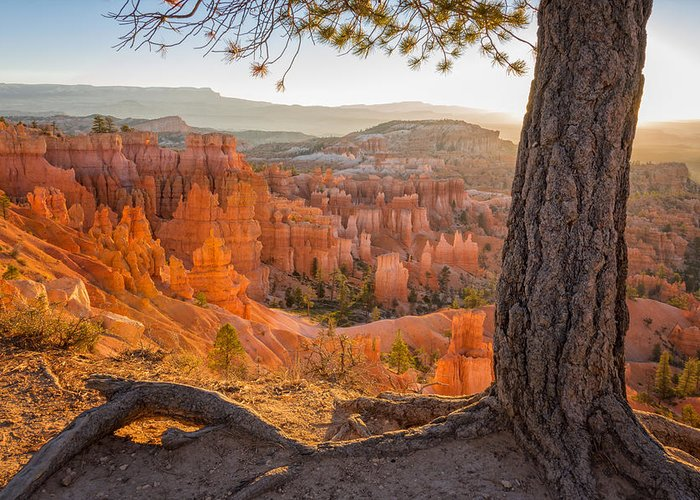 Bryce Canyon National Park Greeting Cards