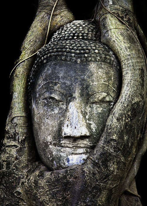 Ayutthaya Greeting Card featuring the photograph Buddha Head In Banyan Tree by Adrian Evans