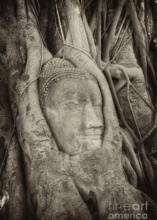 Buddha Greeting Card featuring the photograph Buddha Head In Tree by Fototrav Print