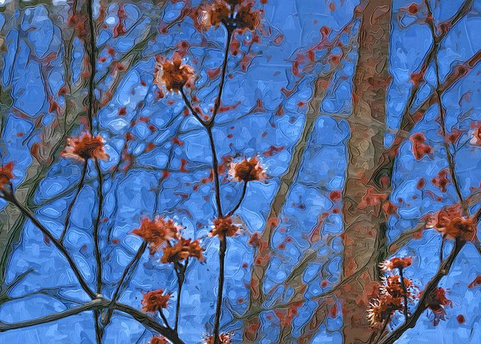 Blue Greeting Card featuring the photograph Budding Maples by Tom Reynen