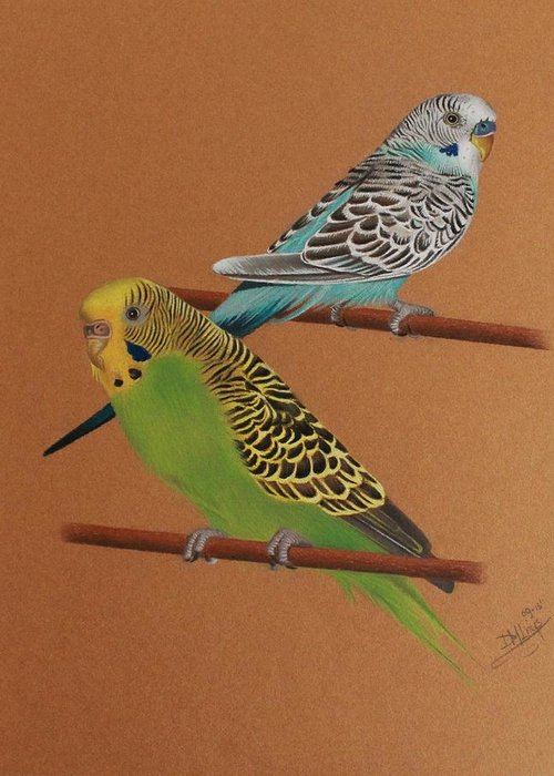 Budgie Greeting Card featuring the drawing Budgies by Denise Nijs