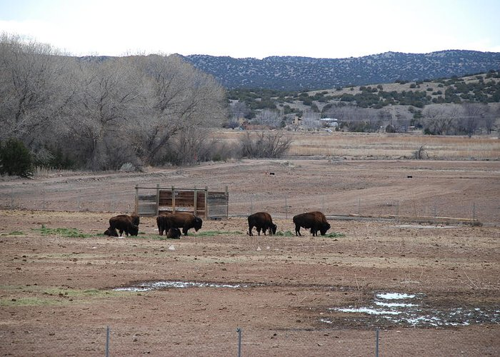 Buffalo Greeting Card featuring the photograph Buffalo New Mexico by Rob Hans