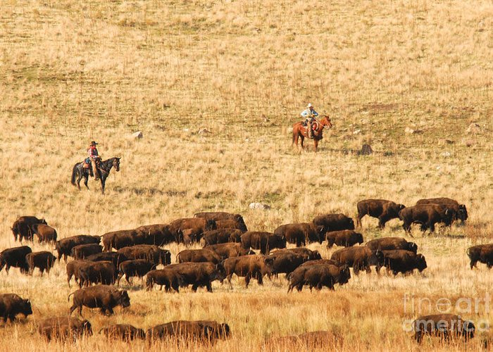 Utah Greeting Card featuring the photograph Buffalo Roundup by Dennis Hammer