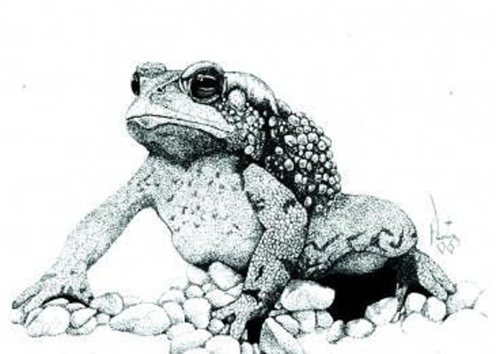 Toad Art Toads Reptile Artist Toad Stool Toader Greeting Card featuring the painting Bufo Americanus by Preston Shupp
