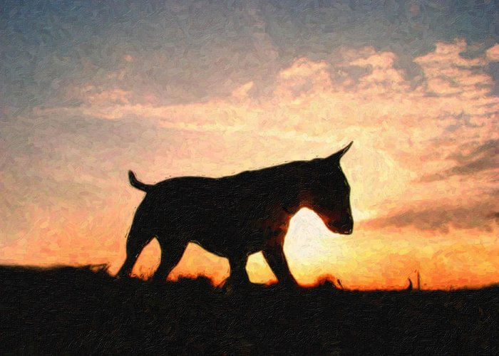 English Bull Terrier Greeting Card featuring the painting Bull Terrier At Sunset by Michael Tompsett