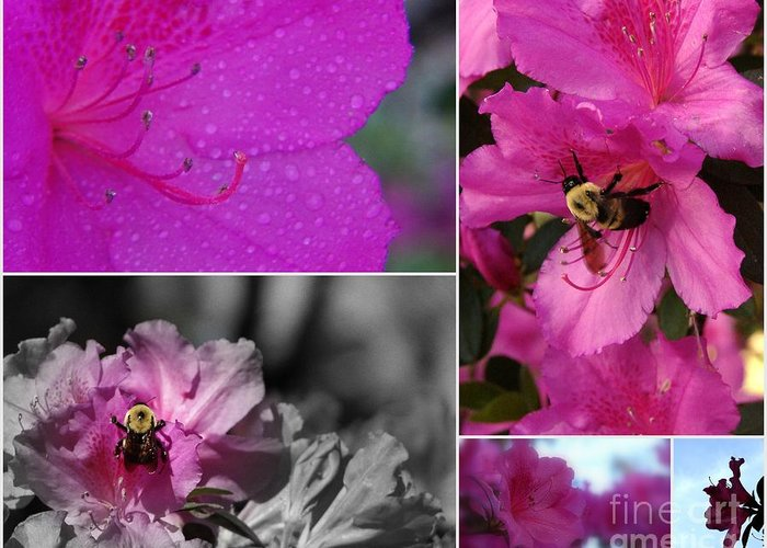 Collage Greeting Card featuring the photograph Bumblebee Bonanza by Priscilla Richardson