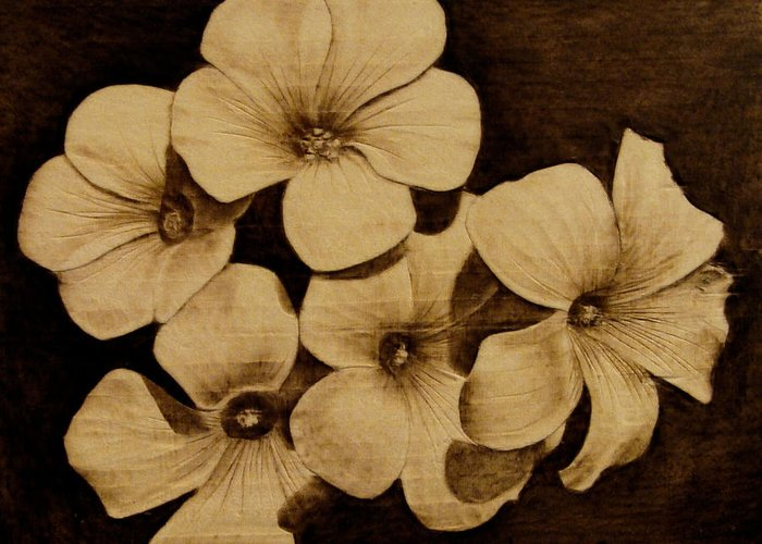 Pyrography; Sepia; Flower; Petals; Boquet; Pansy; Violet; Greeting Card featuring the pyrography Bursting by Jo Schwartz