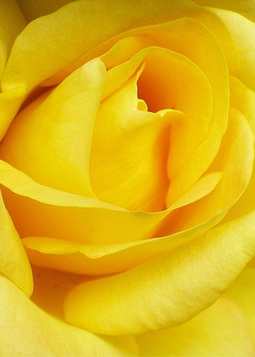 Botanical Greeting Card featuring the photograph Buttercup Rose by Florene Welebny