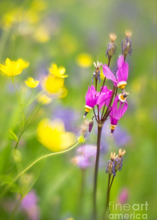 Flora Greeting Card featuring the photograph Buttercups And Shooting Star 1 by Jill Greenaway