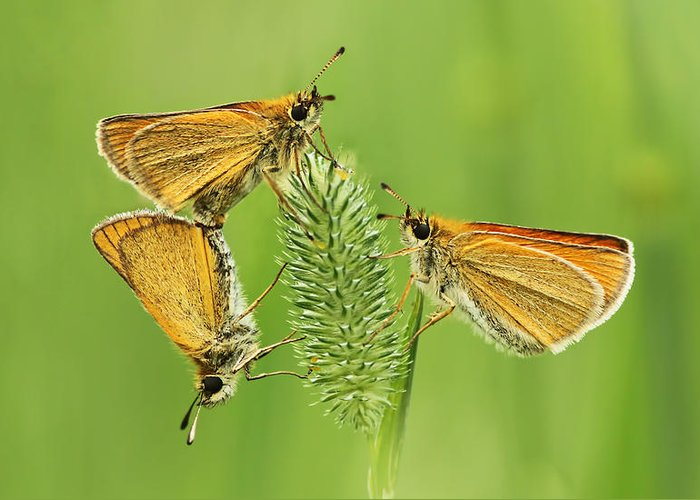 Delaware Greeting Card featuring the photograph Butterflies by Mircea Costina Photography