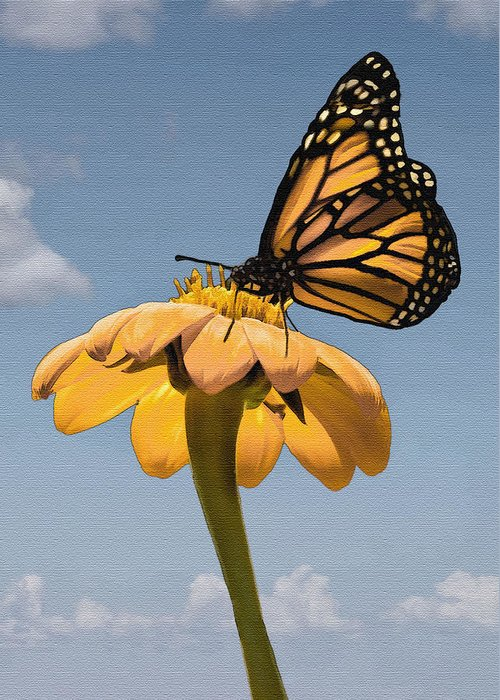 Butterfly Greeting Card featuring the photograph Butterfly And Flower by Sharon Foster