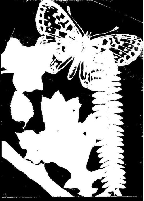 Leaves Greeting Card featuring the photograph Butterfly And Leaves by Warren Thompson