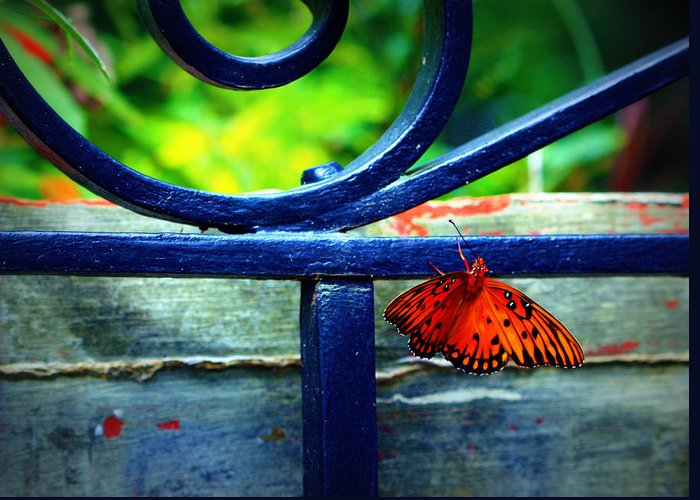 Butterfly Greeting Card featuring the photograph Butterfly At The Gate by Susie Weaver