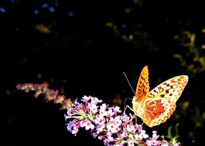 Butterfly Greeting Card featuring the photograph Butterfly Banquet 1 by Will Borden