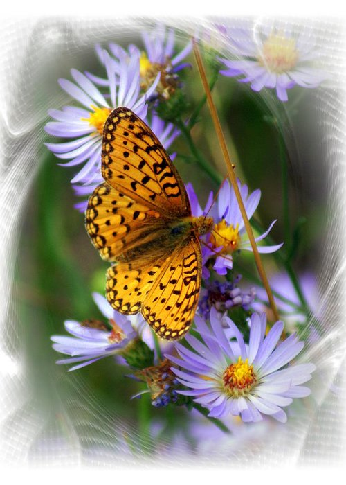 Butterfly Greeting Card featuring the photograph Butterfly Bliss by Marty Koch
