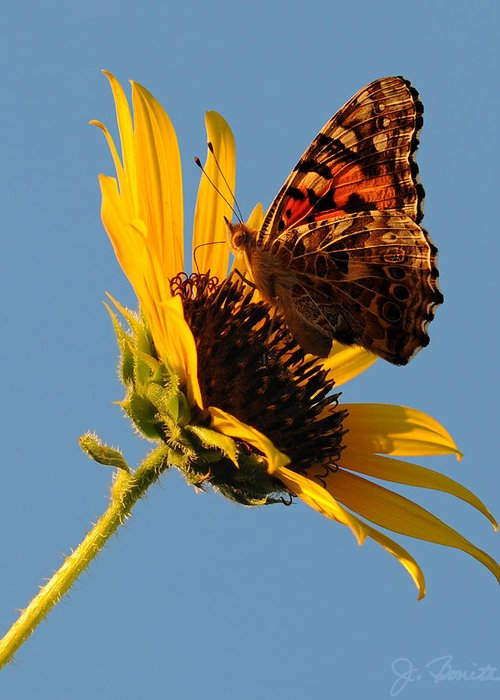 Butterfly Greeting Card featuring the photograph Butterfly Dining by Joe Bonita
