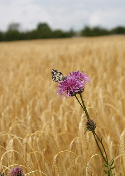 Butterfly Greeting Card featuring the photograph Butterfly In Wheat Field by Jessica Rose