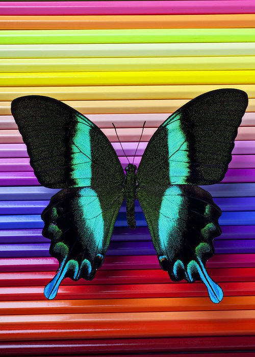 Butterfly Pencils Wings Insect Graphic Greeting Card featuring the photograph Butterfly On Colored Pencils by Garry Gay