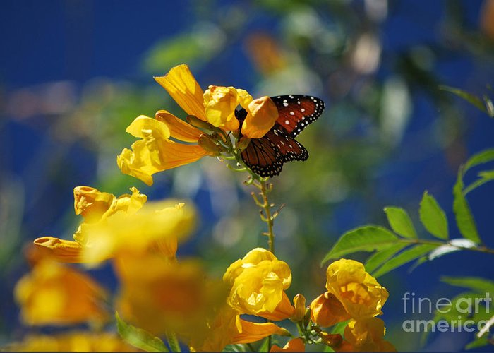 Butterfly Greeting Card featuring the photograph Butterfly Pollinating Flowers by Donna Greene