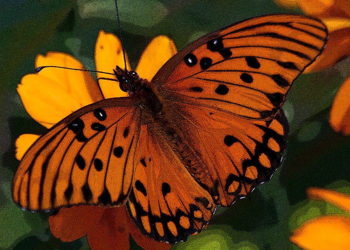 Butterfly Greeting Card featuring the photograph Butterfly by Ralph Perdomo