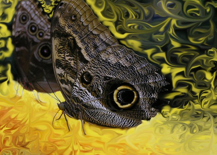 Butterfly Greeting Card featuring the photograph Butterfly Reflections by Louise Magno