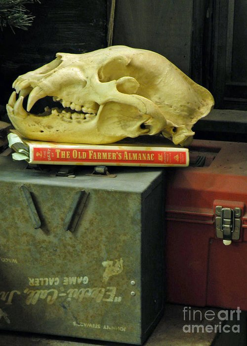 Skull Greeting Card featuring the photograph Bygones by Joe Jake Pratt