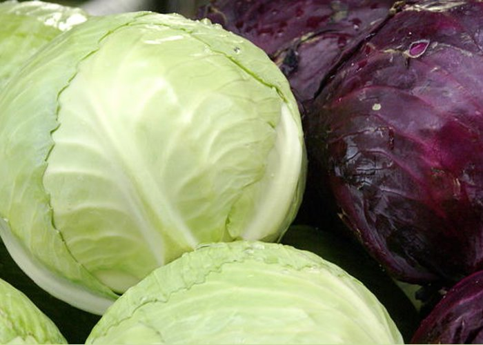 Vegetable Greeting Card featuring the photograph Cabbage Heads by Sonja Anderson