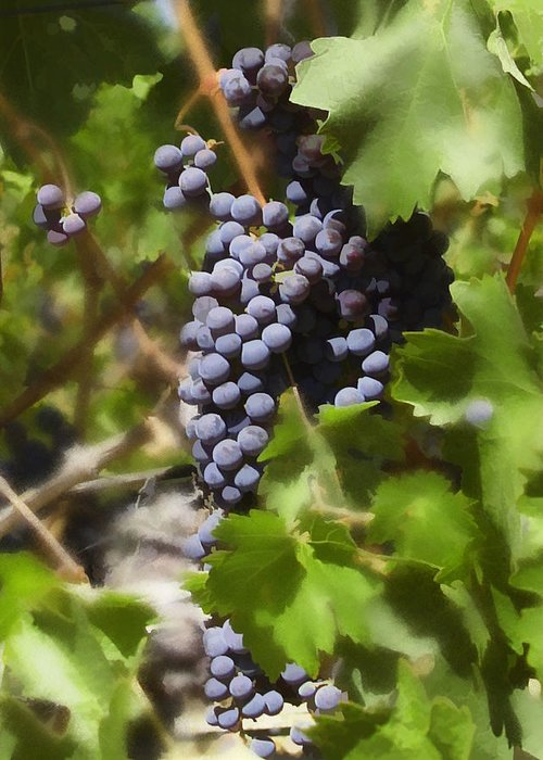 Cabernet Greeting Card featuring the photograph Cabernet by Kurt Van Wagner