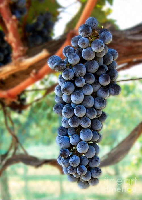 Red Wine Greeting Card featuring the photograph Cabernet Sauvignon by Robert Bales