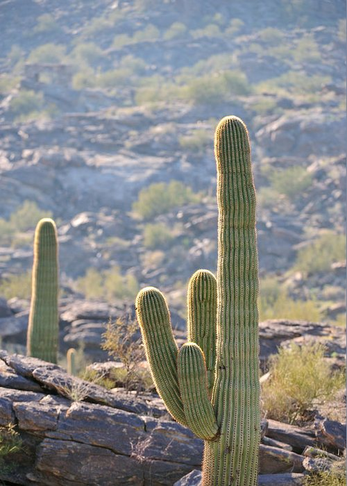 Arizona Greeting Card featuring the photograph Cactus Atitude by Tom Dowd