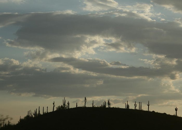 Cactus Greeting Card featuring the photograph Cactus Hill by Kevin Igo