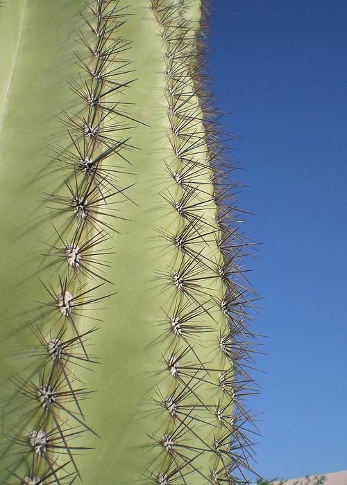 Desert Greeting Card featuring the photograph Cactus Side View by Aleksandra Buha