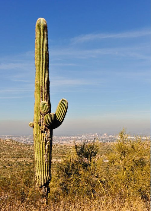 Arizona Greeting Card featuring the photograph Cactus View by Tom Dowd